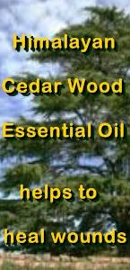 Ormus Minerals Himalayan Cedar Wood Healing Ormus Oil helps wounds