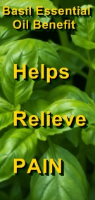 Ormus Minerals Sweet Basil Essential Oil helps relieve pain